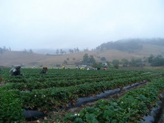 Beyond Strawberry Picking (Photo: el captain)