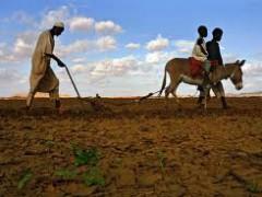 A Malian peasant farmer at work
