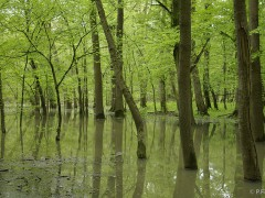 2009 Flood in Slovakia, Zemplín region. Photo by Peter Fenda