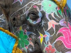Elephant in Motion
