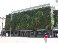 Muro vegetal de 600m² instalado en la fachada de Les alles à Avignon (Plaza Pie), construido por el botánico Patrick Blanc. Foto personal. Difusión ilimitada. julio 2006.