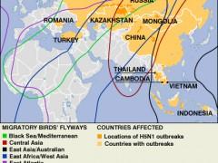 Bird Flu crossing borders: Migratory birds' flyways. UN FAO/OIE. CC BY 2.0.
